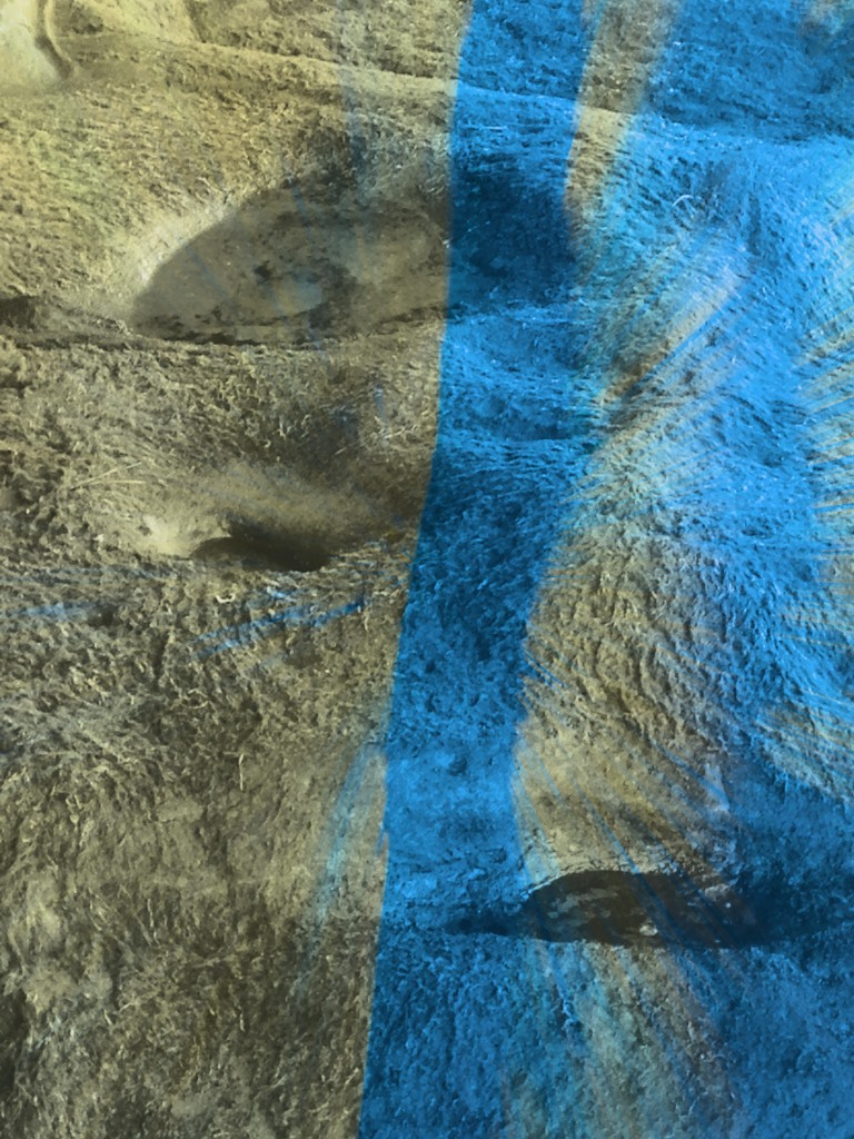 blu mossman